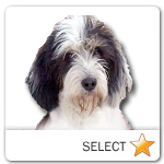 PBGV for dog ecards