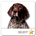 German Shorthaired Pointer for dog ecards