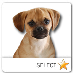 Puggle for dog ecards