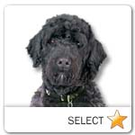 Portuguese Water Dog for dog ecards