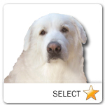 Great Pyrenees for dog ecards