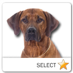 Rhodesian Ridgeback for dog ecards