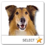 Rough Collie for dog ecards