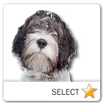 Schapendoes Dutch Sheepdog for dog ecards
