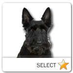 Scottish Terrier for dog ecards