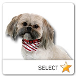 Shih Tzu for dog ecards