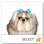 White Shih Tzu for dog ecards