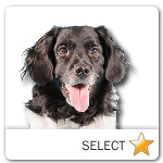 Frisian Pointer for dog ecards