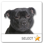 Staffordshire Bull Terrier for dog ecards