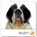 Saint Bernard for dog ecards