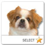 Tibetan Spaniel for dog ecards