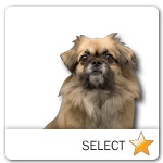 Sable Tibetan Spaniel for dog ecards
