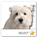 West Highland White Terrier for dog ecards