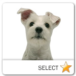 White Schnauzer for dog ecards