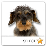 Wirehaired Dachshund for dog ecards