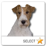 Wirehaired Fox Terrier for dog ecards