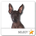 Mexican Hairless Dog for dog ecards