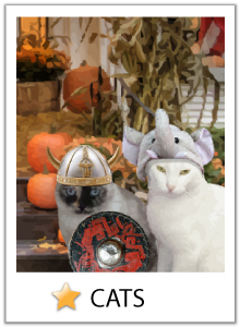 Click here to view our cat Halloween ecards
