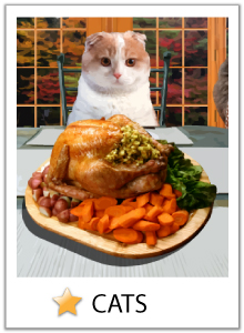 Thanksgiving cat ecards