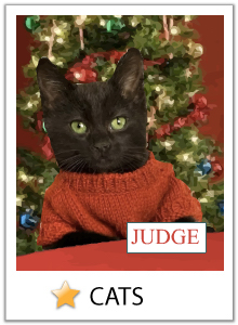 Click here to view our cat Christmas ecards