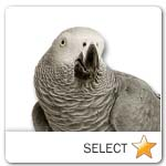 African Grey Parrot for pet ecards
