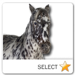 Appaloosa Horse for pet ecards