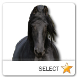 Friesian Horse for pet ecards