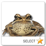 Frog for pet ecards