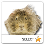 Guinea Pig for pet ecards