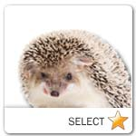 Hedgehog for pet ecards