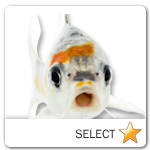 Koi Fish for pet ecards