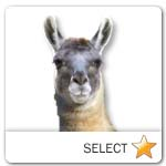 Llama for pet ecards