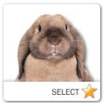 Lop-Eared Rabbit for pet ecards