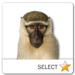 Monkey for pet ecards