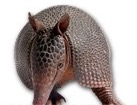 Armadillo for pet ecards