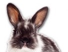 Black and White Rabbit for pet ecards