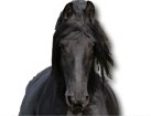 Friesian Horse for dog ecards