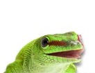 Gecko for dog ecards