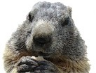 Groundhog for pet ecards