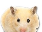 Hamster for pet ecards