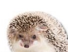 Hedgehog for dog ecards