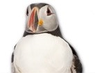 Puffin for pet ecards