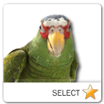 Parrot for pet ecards
