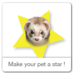 Make your pet an ecard star