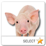 Pig for pet ecards