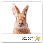 Bunny Rabbit for pet ecards