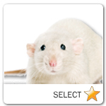Rat for pet ecards
