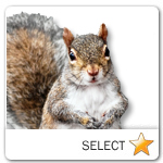 Squirrel for pet ecards