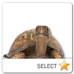 Turtle for pet ecards